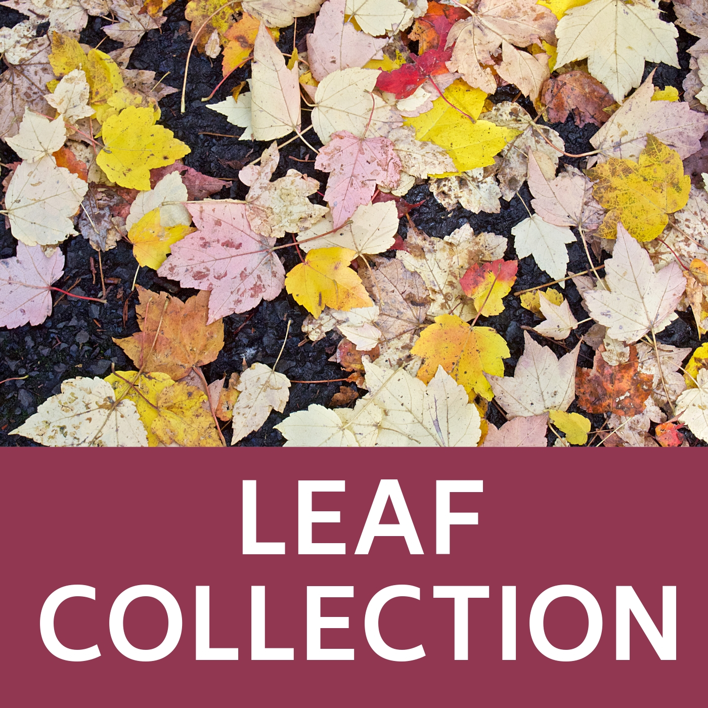Leaf Collection Icon that links to the webpage with information about leaf collection