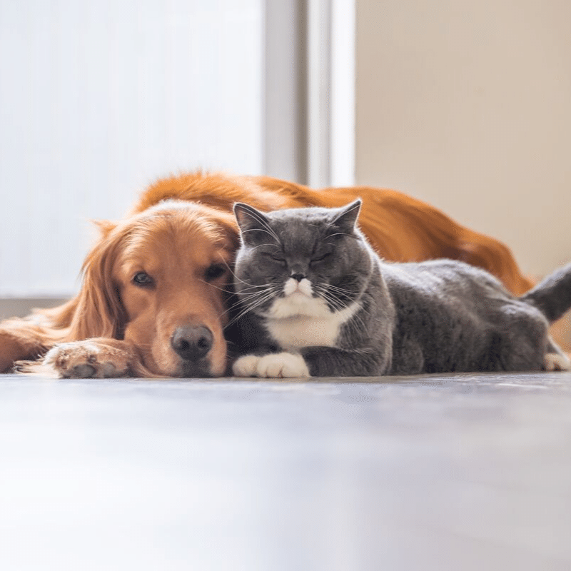 Image of cat and dog laying next to each other.